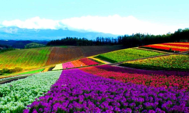 Hokkaido เมืองมหัศจรรย์เเห่งญี่ปุ่น